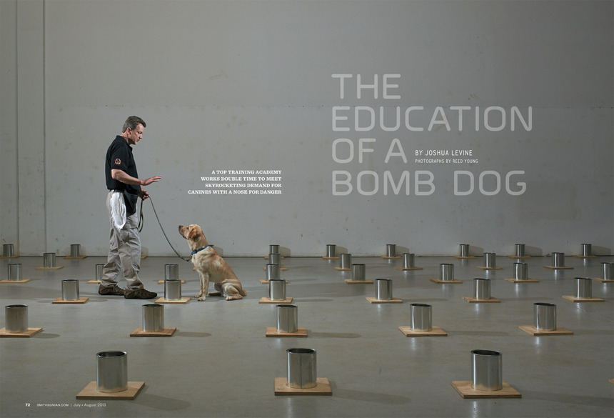 r-young-bomb-dogs-01